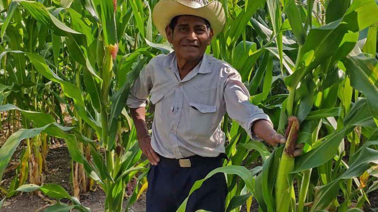 Fortalecimiento de la resiliencia de familias indígenas afectadas por el fenómeno de El Niño en el corredor seco de Guatemala