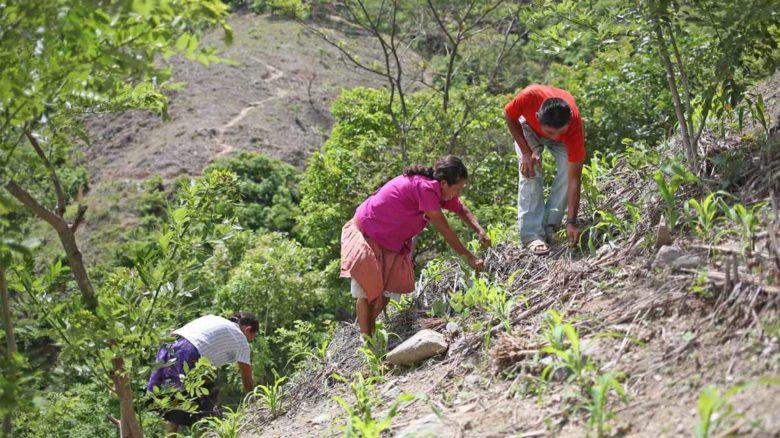 Ayuda de transición para fortalecer la resiliencia de las familias más vulnerables de pequeños agricultores en el corredor seco de América Central