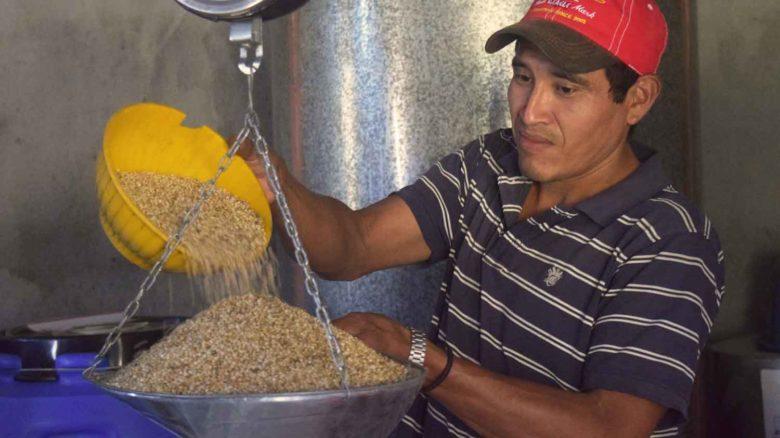 Aumento sostenible de los ingresos de familias campesinas en Nicaragua